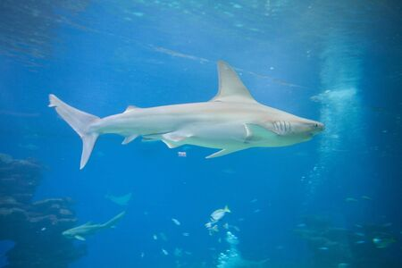 A nice view of big shark