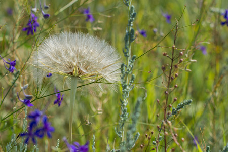steppe: STEPPE FLOWERS Stock Photo