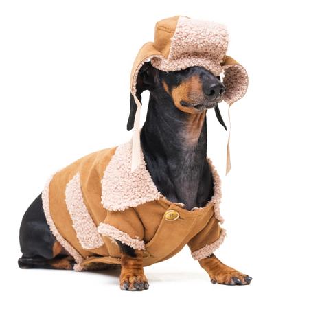 portrait of a dog in winter clothes Standard-Bild - 110133856