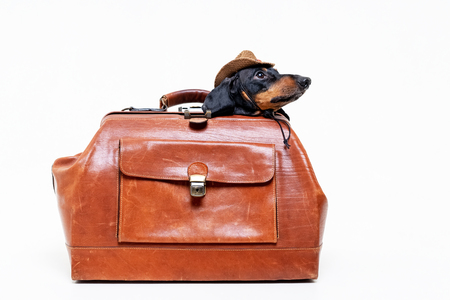 Dachshund breed dog, black and tan, in a cowboy hat hid in a vintage suitcase for travel, isolated on gray background Standard-Bild - 118197265