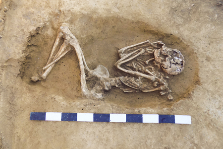Archaeological excavations man and finds (bones of a skeleton in a human burial),  working tool, ruler, a detail of ancient research, prehistory.