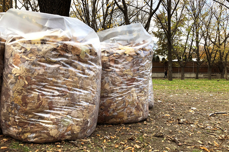 Full white garbage bags with autumn leaves on the ground in the city park. Seasonal cleaning of foliage