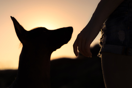 Girl and her dog on a walk, silhouetted against the sunsetting sky Stock Photo
