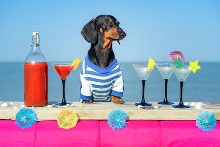divertente e simpatico cane bassotto che beve cocktail, al bar in una festa in un beach club con vista sull'oceano