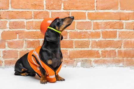 Dackelhund, schwarz und braun, sitzt auf dem Hintergrund einer schmutzigen Backsteinmauer, in einer orangefarbenen Bauweste und einem Helm, während einer Gebäuderenovierung und schaut nach oben. Platz für Text kopieren