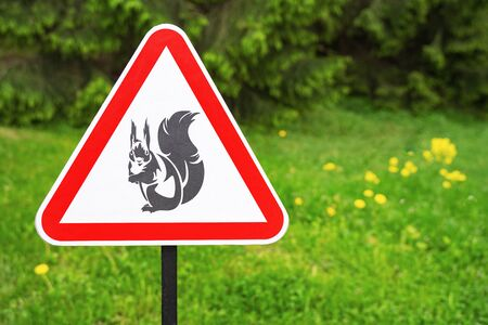 Red triangle sign warning  of the presence squirrels on the background of green trees in the park