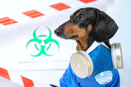 Black and tan cute dachshund dog in a hazardous materials suit with self-contained breathing apparatus in the laboratory. Biohazard warning sign and signal tape. Environmental Protection. Standard-Bild