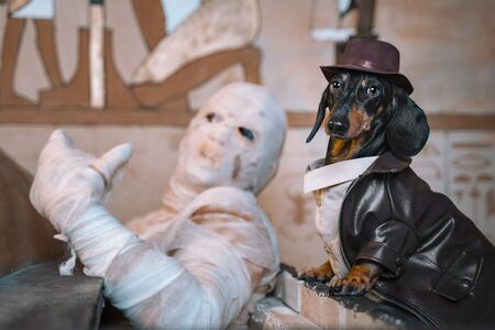 Dog with a man dressed as a mummy sits shrouded in bandages at a celebration of Halloween Standard-Bild