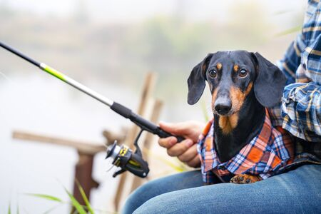Cute black and tan dachshund sits with the owner, fishing on the river wooden bridge. The both wearing casual, dog in funny checked shirt, man holds the rod. Outdoors, nature background.