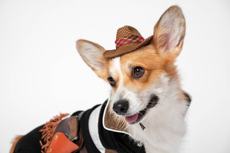 Funny cute red and white corgi smiling looking at the camera, wearing cowboy costume and hat, on white background. not isolate Zdjęcie Seryjne