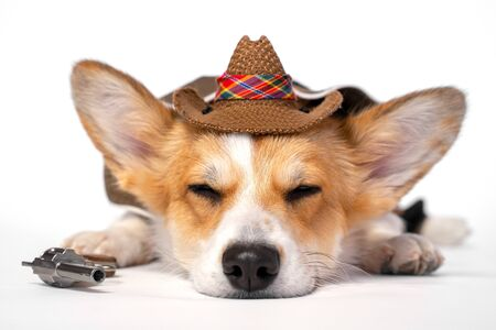 Funny cute red and white corgi lays on the floor with eyes closed, wearing cowboy costume and hat, with little revolver in front paw. Comic shooting on white background.