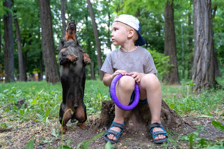 A boy plays with his dog a dachshund, trains, a dog fulfills a command to stand on two paws, for a walk in a green park
