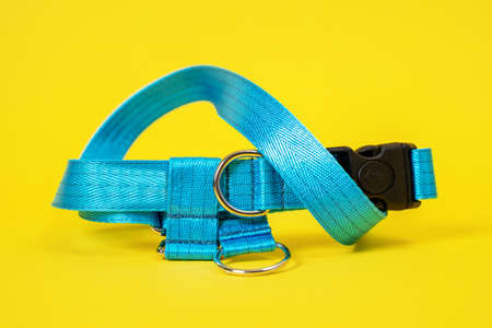 close up сolorful blue dog collar and leash with silver metal fittings from silky tape. Pet supplies 写真素材