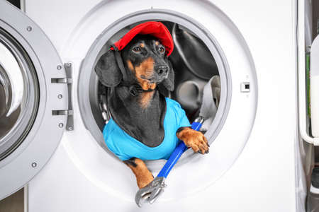 Portrait of funny dachshund in plumbers costume with red cap and wrench is sitting in drum of washing machine. Festive and masquerade costumes for animals. Advertising large household appliances