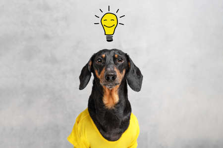 smart and clever dog dachshundwith a light bulb with a smile, over your head. having an idea. 免版税图像