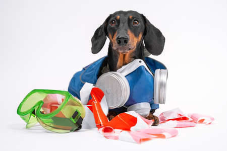 Obedient dachshund in hazmat suit with respiratory protective mask sits on white background, signal tape and safety glasses around. Costume protects against bio and chemical threats in affected areas