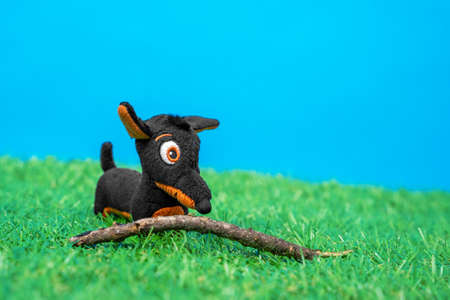 Soft toy in shape of funny little black and tan dachshund dog plays with wooden stick on green grass of artificial lawn, blue background, front view, close up.