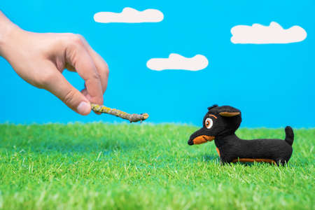 Human plays with tiny dachshund soft toy using wooden stick on green grass of artificial lawn, blue background with fake clouds. Demonstration of dog games and training.