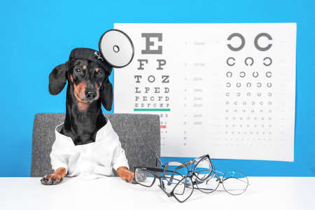 Funny dachshund dog ophthalmologist in doctors costume with glasses for vision correction, professional equipment on the desktop, poster with letters for eye chart test on background.