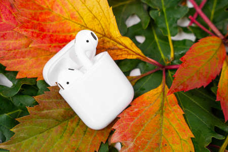 ROSTOV, RUSSIA - August 26, 2020: Apple AirPods wireless Bluetooth headphones and charging case for Apple iPhone lie on colorful foliage. Autumn presentation Apple.