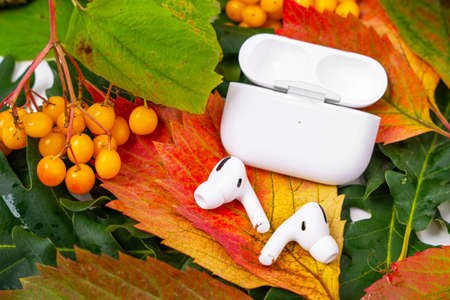 ROSTOV, RUSSIA - August 26, 2020: Wireless headphones Apple AirPods Pro in opened charging case, active noise cancellation immersive sound lie on colorful foliage. Autumn presentation Apple. Editorial