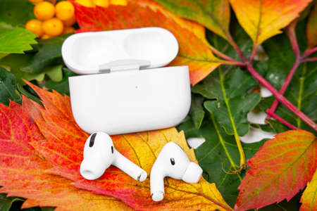 ROSTOV, RUSSIA - August 26, 2020: Wireless headphones Apple AirPods Pro in opened charging case, active noise cancellation immersive sound lie on colorful foliage. Autumn presentation and event Apple