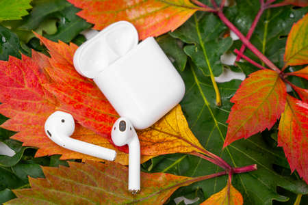 ROSTOV, RUSSIA - August 26, 2020: Apple AirPods wireless Bluetooth headphones, charging case for Apple iPhone lie on colorful foliage. Autumn presentation and event Apple. Editorial