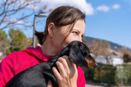 Young woman hugs cute dachshund puppy outside. Owner walks with her beloved pet in beautiful weather. Dog is in hands of person if it walks without leash.
