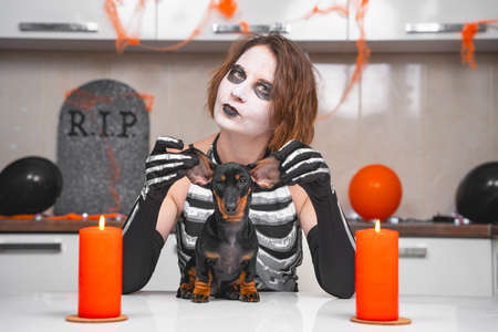 Young sullen woman with scary makeup in skeleton costume examines dachshund puppy on table, apartment is decorated for Halloween party. Creepy bloodthirsty monster wants to eat dog Stock Photo