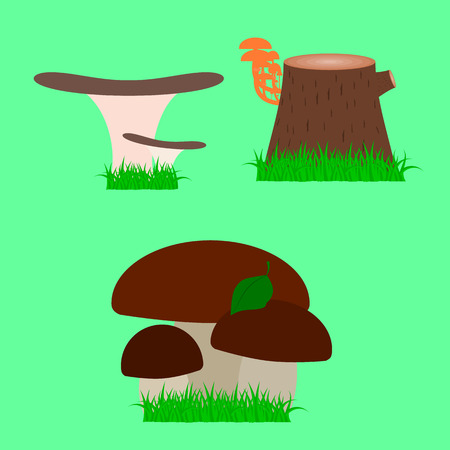 edible: edible mushrooms on a green meadow , vector illustration Illustration