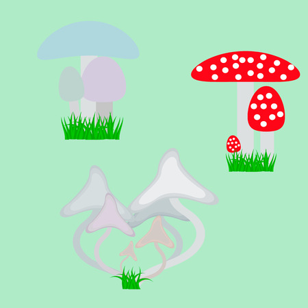 inedible: Different types of non-edible mushrooms such as Amanita phalloides, or.