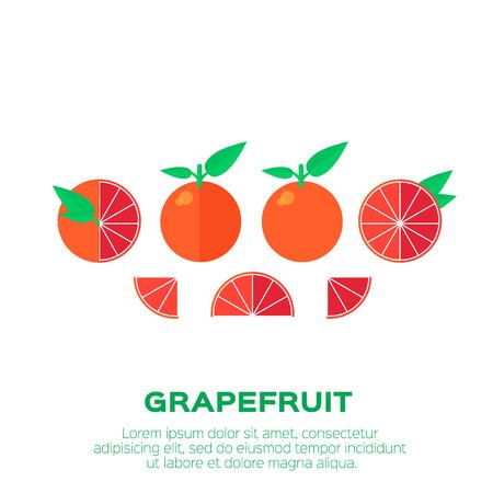 grapefruits: Summer set of Grapefruit. Whole and cut half healthy grapefruits. Vector illustration