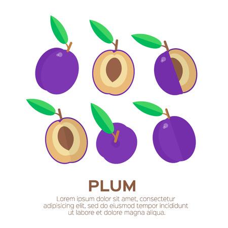 prune: Summer set of Ripe Plum. Sweet juicy fruit. Blue plum fruits isolated on white background. Vector illustration Illustration