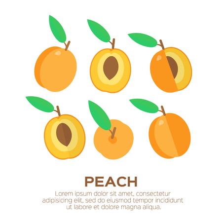 Summer set of peach with leaf. Whole and cut orange pears. Symbol of food, sweet and vitamin, healthy. Vector illustration