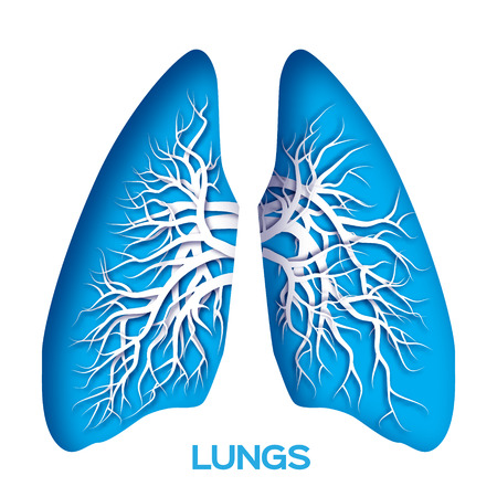 clean lungs: Lungs origami. Blue Paper cut  Human Lungs anatomy with bronchial tree. Applique Vector design illustration.