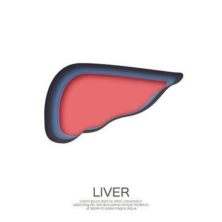 Human liver in paper cut style. Colorful origami layered organ on white background.