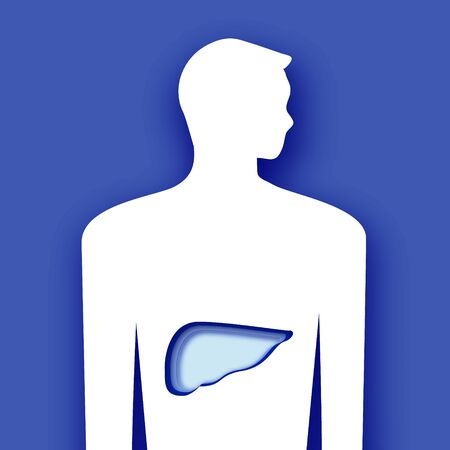 Male liver. Anatomy of human body in paper cut style. Medical symbol. Blue background