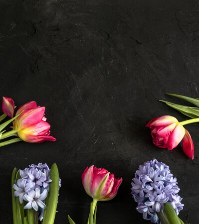 Spring pink tulips and purple hyacinth laying at the bottom of the black chalk board backdrop.