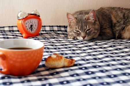morning - alarm clock, cup of coffee and drowsiness cat on blue and white gingham tablecloth Stock Photo
