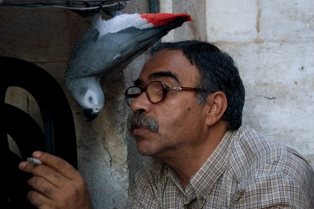 Old City, Jerusalem, Israel - July 17, 2009: Man playing with his parrot.