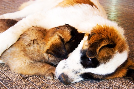 Dog and puppy together .