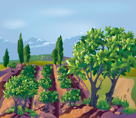 Plantation, bushes  mountains in the background Vector