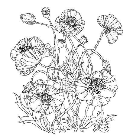 best book: field poppies. Spring Pattern for adult coloring book in zenart style. Hand-drawn, retro, doodle, vector, uncoloured. The best for your design, textiles, posters, coloring book in vector.