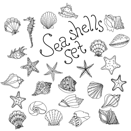 uncolored: Sea shell, starfish, seashell, nautilus sea fauna ocean aquatic underwater uncolored vector set. Hand drawn marine seashell marine coloring book stlyle illustration of sea shells on white background. Illustration