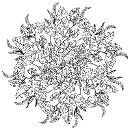 art therapy: mandala shape roses in old masters style bouquet for adult coloring book in zen art therapy style for anti stress drawing. Hand-drawn, vector, detailed mandala, for coloring book, poster design