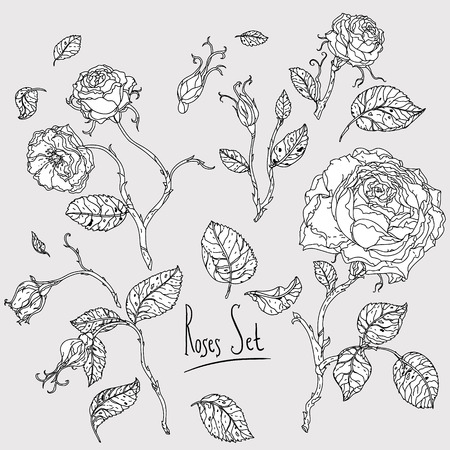 highly detailed: Highly detailed uncolored colouring book style hand drawn wild roses set for adult colouring book. Hand-drawn, doodle, vector the best for your design, wedding cards, coloring book. Black and white.