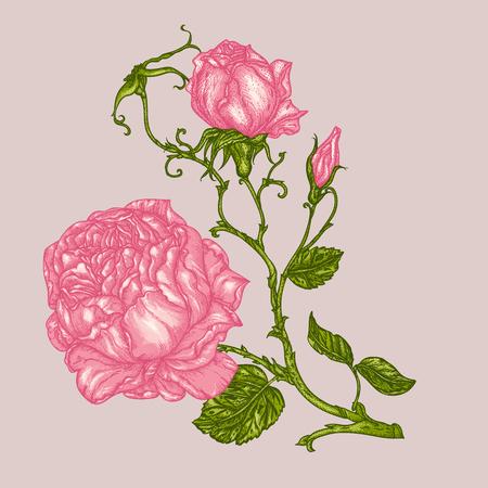 peonía o flor rosa en estilo victoriano del cordón .