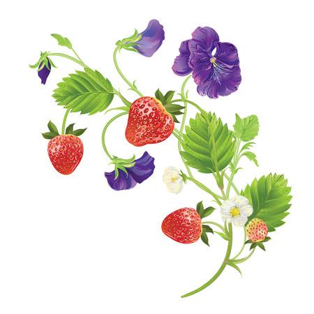beautiful heartsease . vector illustration of a realistic Illustration