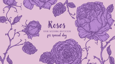 Purple roses background.