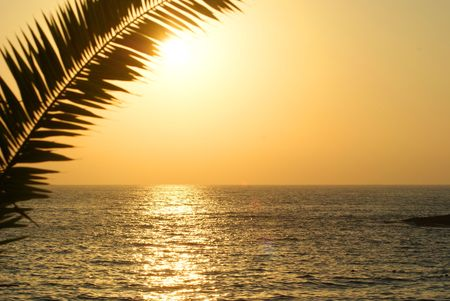 ocean sunset: Yello Sunset with palm tree branch Stock Photo